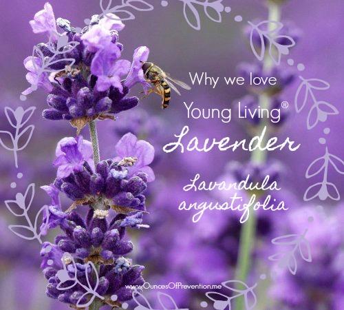 Lavender & Bee (1)