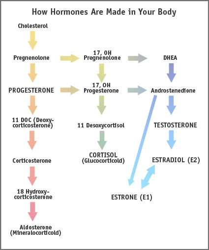 metabolicpathways HORMONES