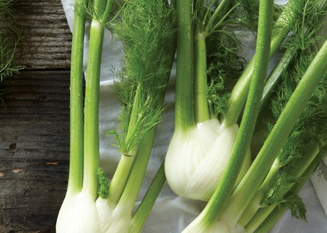 fennel plants