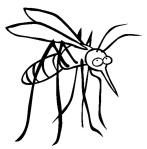 mosquito B & W