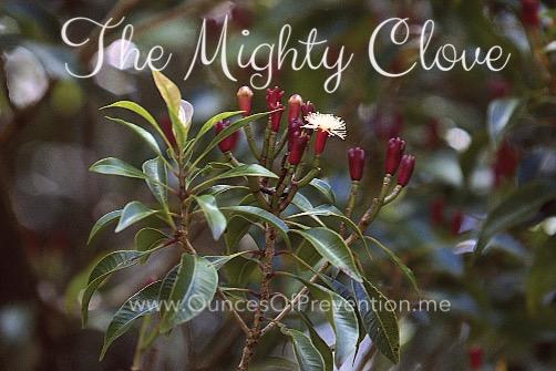 mighty-clove